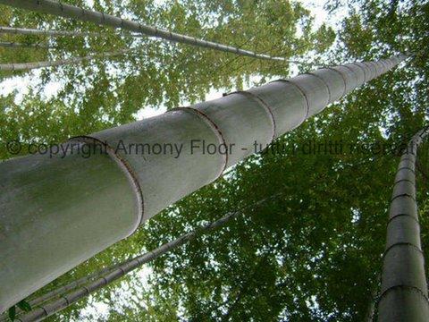 Parquet bamboo prezzi pavimenti bambu for Parquet bambu
